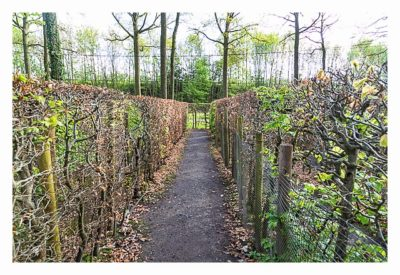 Brugse Beer IV - Labcache Geomazing - Weg durch Labyrinth