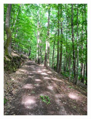 Ramberg und der Dahner Felsenpfad - Im Wald