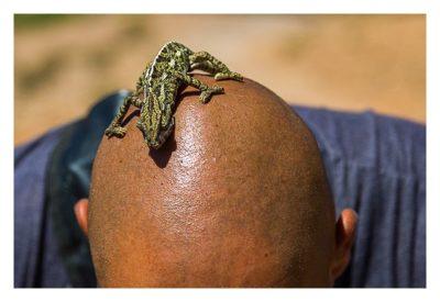 Im hohen Atlas: Das Chamälion auf dem Kopf