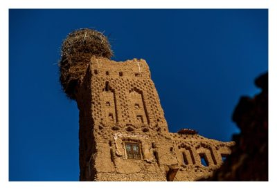 Im hohen Atlas: Stroechennest auf der Kasbah