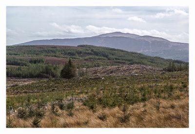 Wicklow-Mountain - die alte Militärstrasse - Blick in die Landschaft