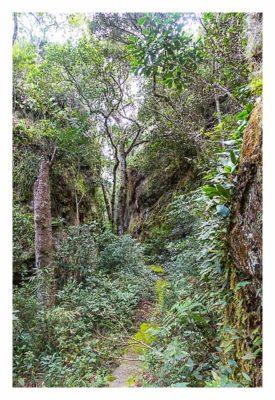 Natur pur im Pirituba Canyon - Der schmale Pfad durch die Schlucht