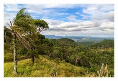 Natur pur im Pirituba Canyon - Auch hier oben gibt es Palmen
