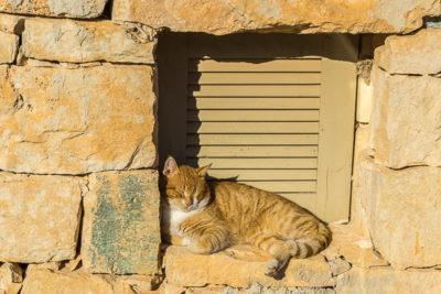 Geocaching auf Malta: Der Süden - die Tempel von ?a?ar Qim und Mnajdra - Die Katze genießt die Sonne