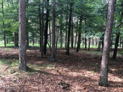 Offener Wald bei Nijmengen