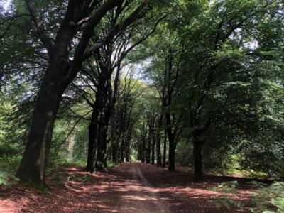 Waldweg bei Nijmengen