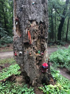 Besonderer Geocaching-Baum