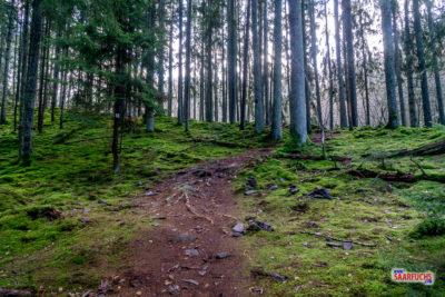 Geocaching & Wandern: Die Traumschleife Steinhauerweg